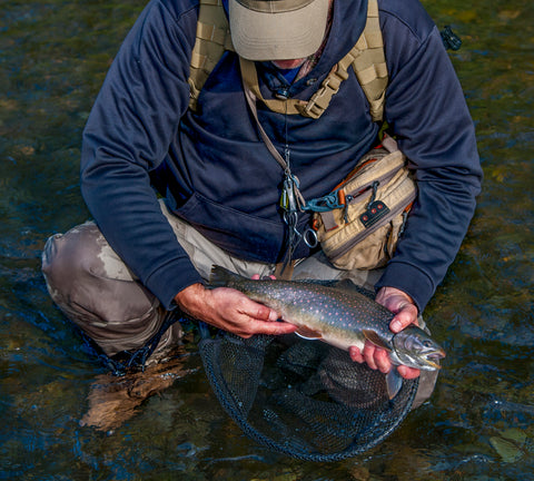 dolly, dolly varden, fish, fishing, fly, fly fishing, river,alaska, alaskan