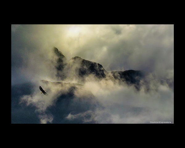 Eagle Over Seward Mountains - Art Print