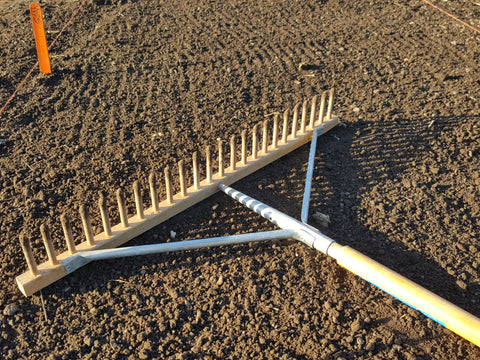 Rake the seedbed one last time