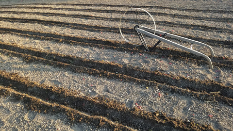 preparing the furrows for planting corn with a wheel hoe