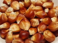 Floriani Red Flint Corn shelled and cleaned