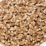 Red Bobs Wheat seed