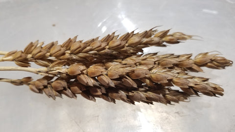Fulcaster Wheat