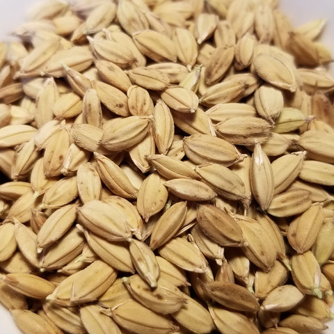 Duborskian Rice (seeds)