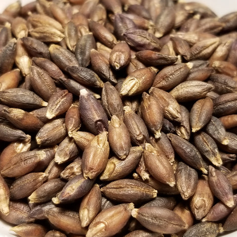Seeds of Gopal Barley