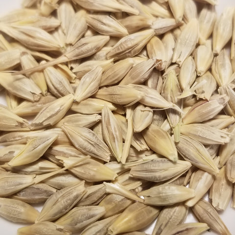 Harrison Barley seeds