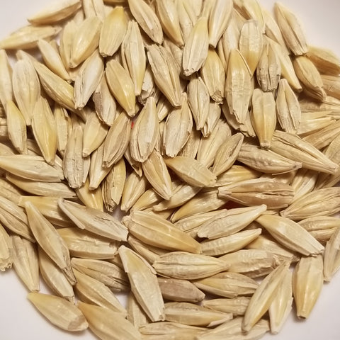 Canada Winter Barley seeds
