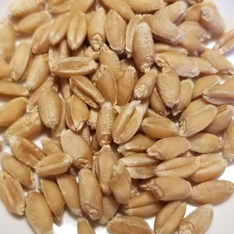 Dual Wheat seeds