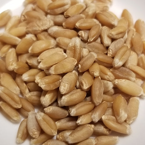 Marmin Wheat berries