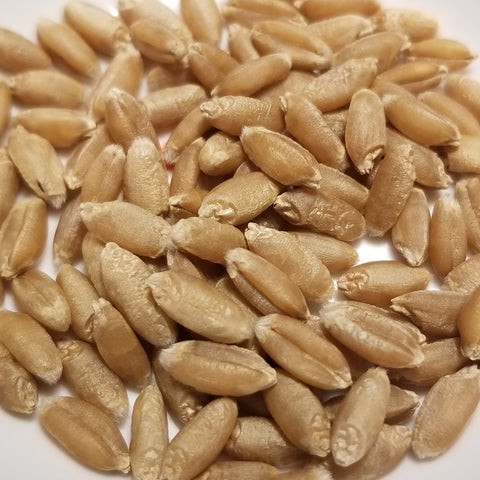 Nabob Wheat seeds