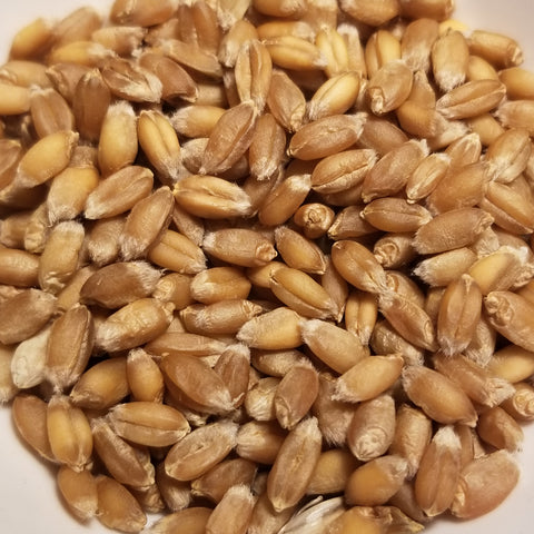 Georgian Winter Bread Wheat seeds