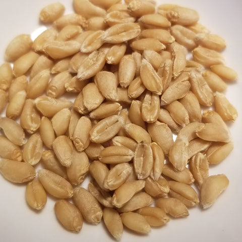 Teremok Wheat seeds