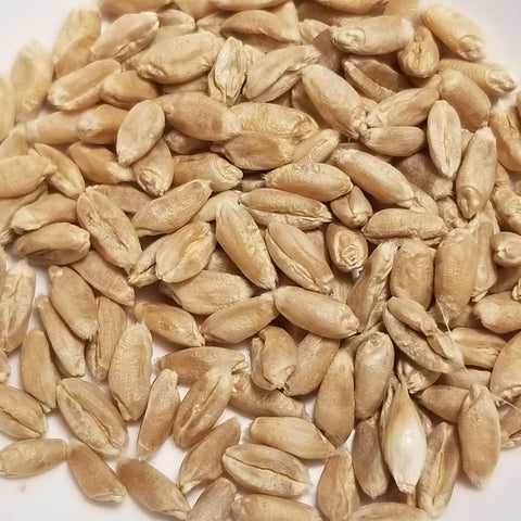 Tiroler Fruhe Binkel Wheat seeds