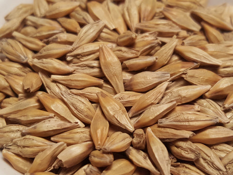 Full Pint barley seeds