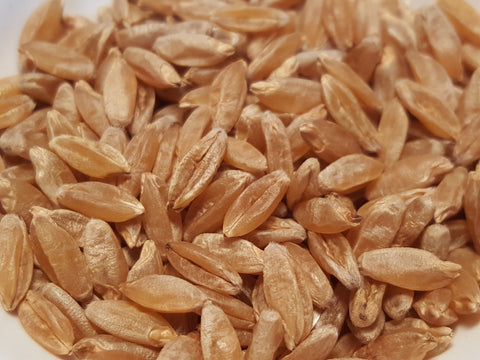 Milagre wheat seeds