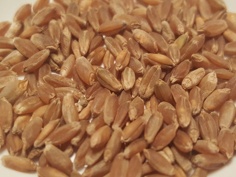 Tadinia wheat seeds