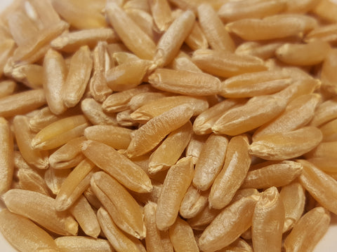 Hourani Wheat seeds