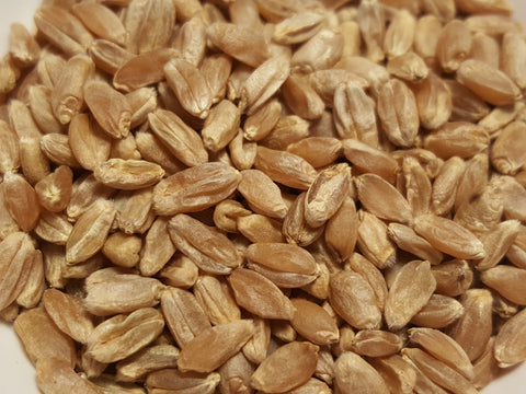 Vavilov Wheat seeds