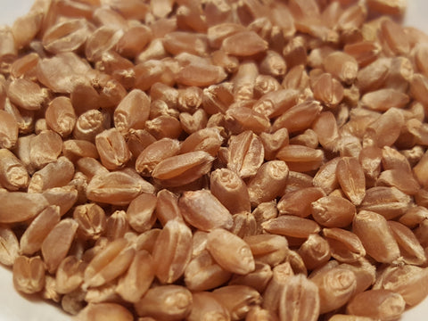 Red Bobs wheat seeds