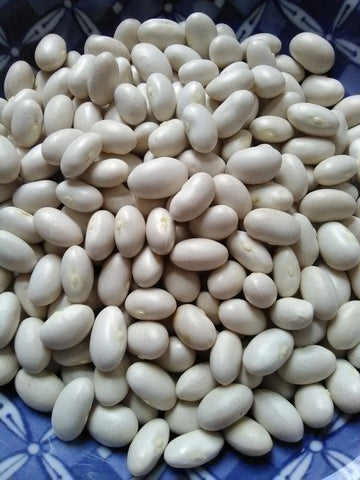 Deseronto Potato Bean; (Phaseolus vulgaris); Heirloom; Bush bean with runners; Dry bean; Tyendinaga;
