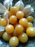 Goldie Ground Cherry; P. pruinosa; Husk Cherry; Plump; Burst of flavor;