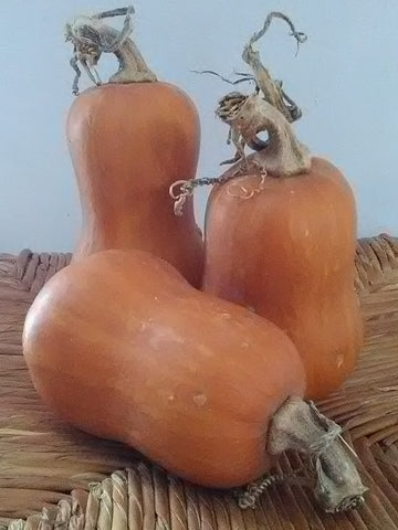 Honeynut Squash; C. moschata; Mini-butternut; Hand-Pollinated; Taste like Yams; Trellis;