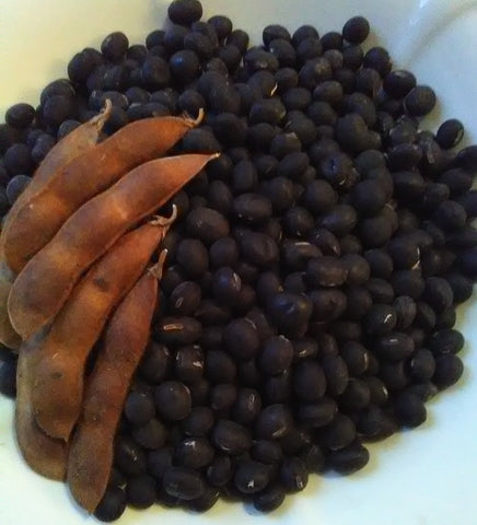 Kuroshinju Soybean; G. max; Black Pearl; NON-GMO; Fresh; Dry; Bush