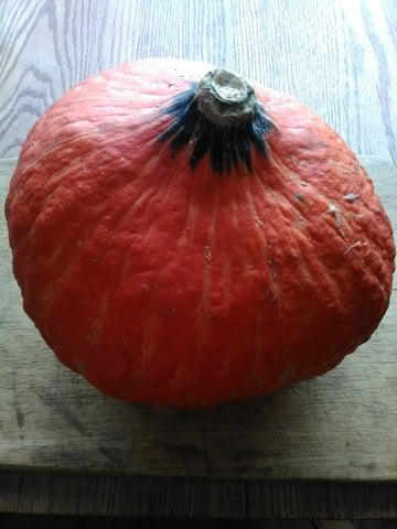 Lakota Squash - delicious in savory or sweet dishes