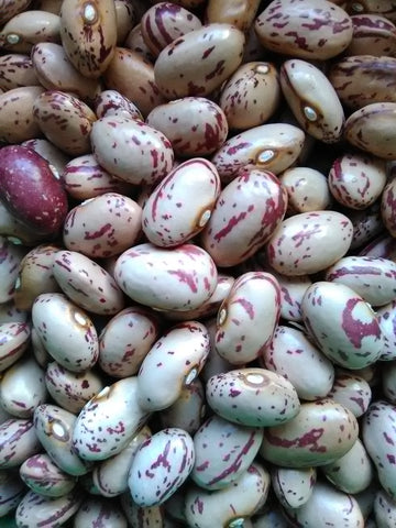 Lina Cisco's Bird Egg Bean a Slow Food Ark of Taste variety
