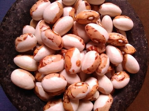 Odawa bean seeds
