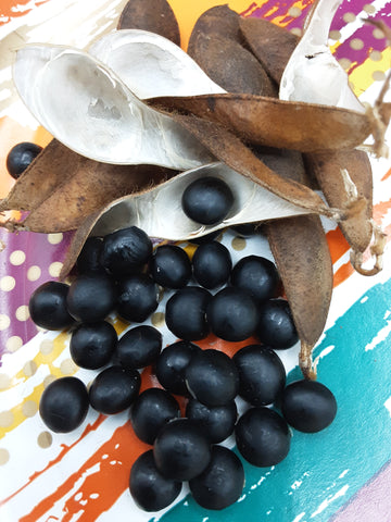 Glossy black Shichigatsu Mame Soybean seeds with their dark brown dry pods