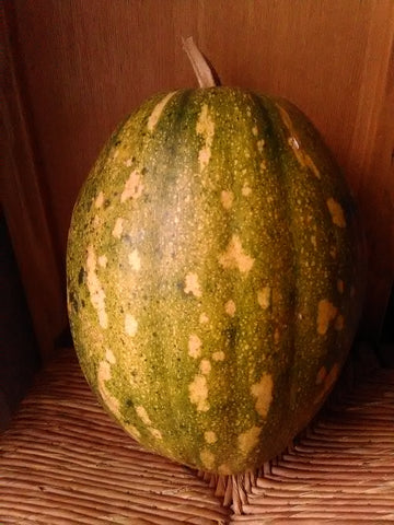 Miami Green Spotted Squash