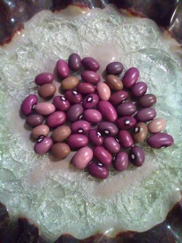 Ugandan Bantu Beans are a gorgeous landrace assortment of dry beans in hues of purples, pinks, creams & patterns