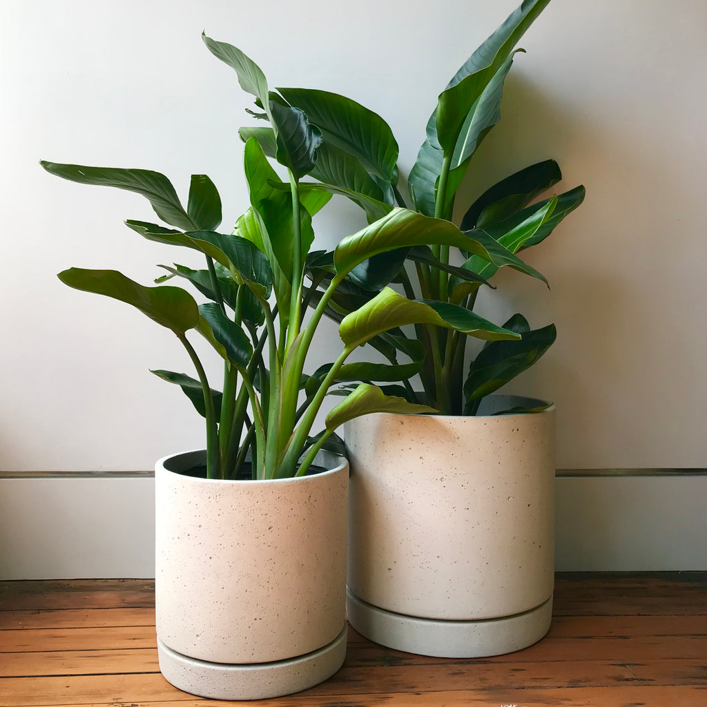 Cement Cylinder Planter with Tray