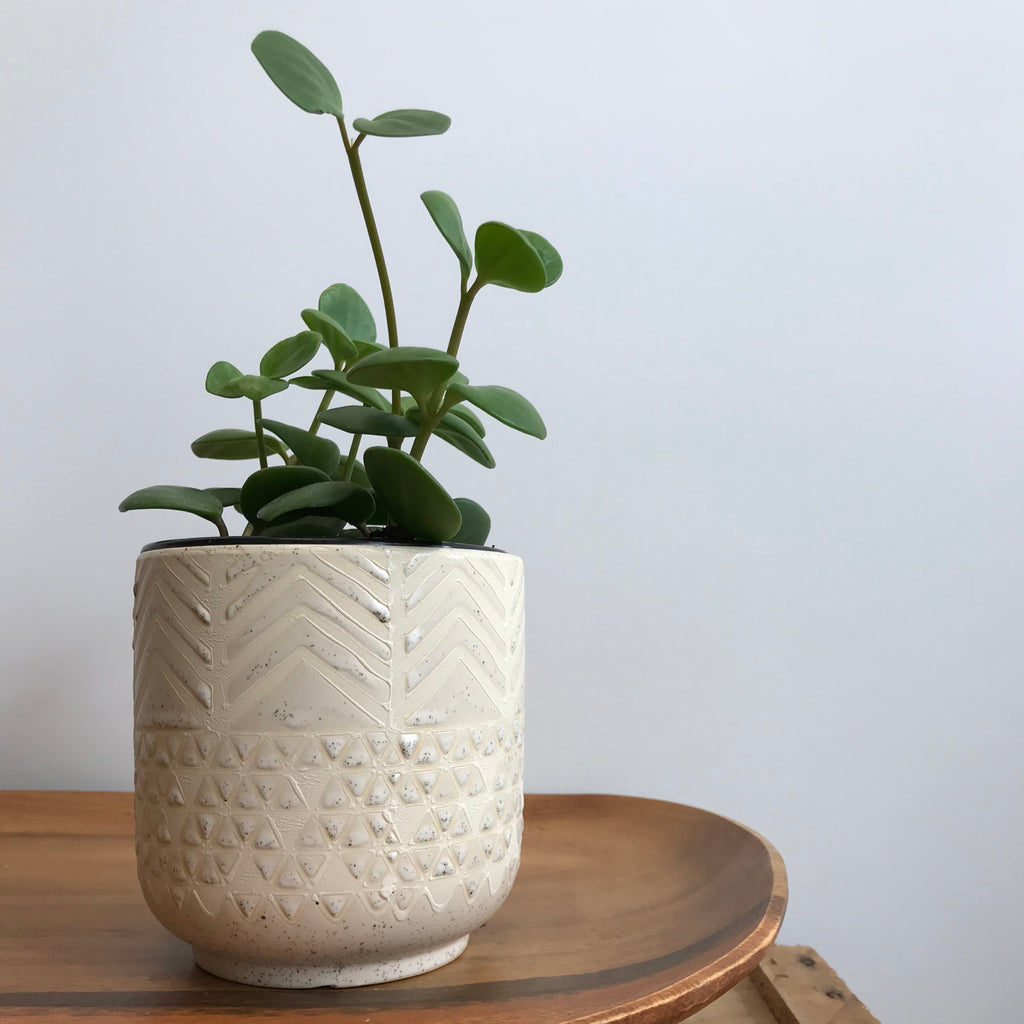 Geometric Patterned Pot