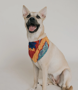 ISHIVATVA DOG KERCHIEF (ASSORTED)
