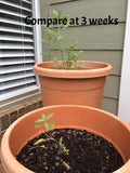 Compare the value of organic matter on Culinary Sage seedlings after 3 weeks of growth..
