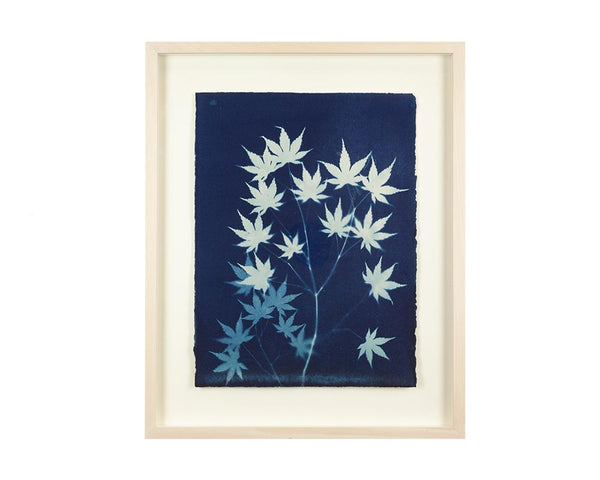 Limited Edition Framed Cyanotype - 14  RESERVED