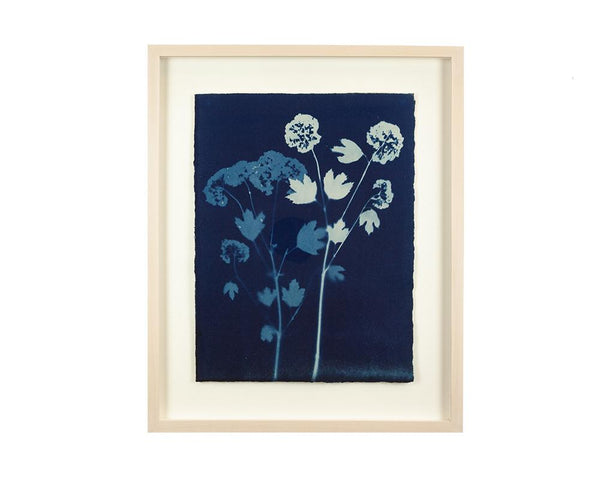 Limited Edition Framed Cyanotype - 9  RESERVED