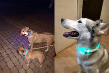 USB Dog Collar LED