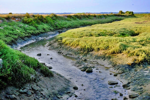 Traict Guerande Salt Marshes