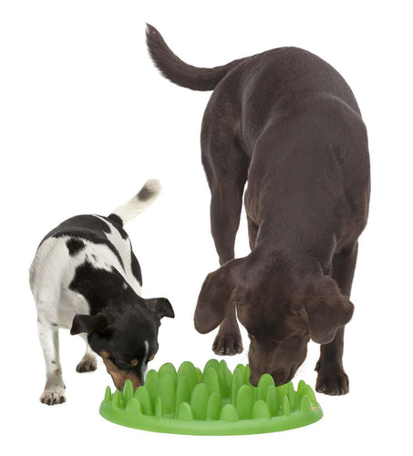 Northmate Green Slow Feeder Dog Bowl - Pet Star