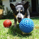 Aussie Dog Mitch Soft Ball - Pet Star
