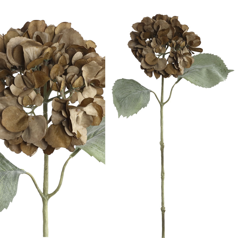 Hydrangea stem with leaves