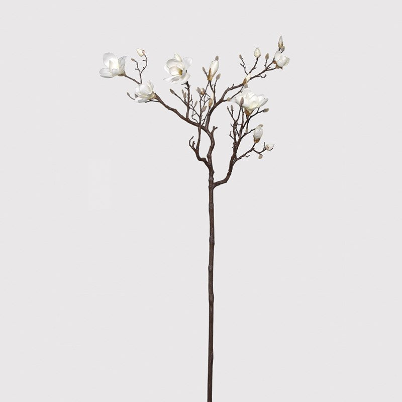 White magnolia tree branch