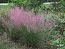 Muhlenbergia filipes