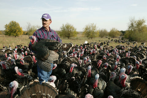 Frank Reese and his Bronze Turkeys
