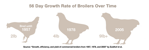 56 Day Growth Rate of Broiler Chickens Over Time