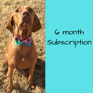 6 Month Subscription