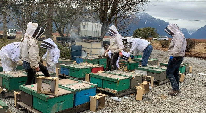 Beekeeping Course - Level 2